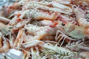 pesce_pupa_ristorante3