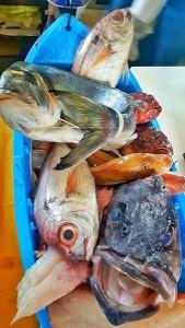 pesce_pescato_pupa_ristorante